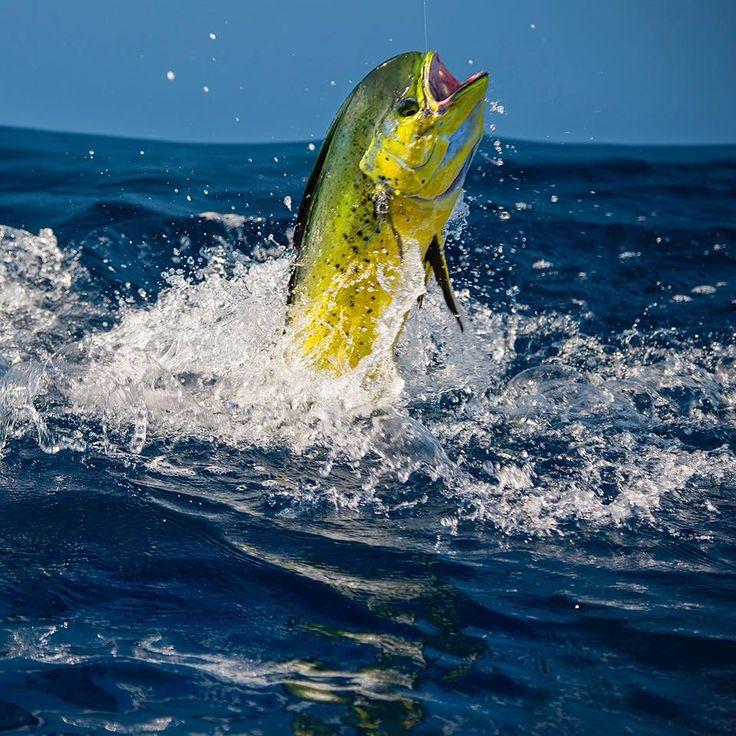 1818 best saltwater fishing images on pinterest under for Best fishing kayak under 400