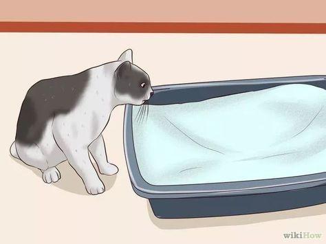 Como eliminar el olor a orina de gato