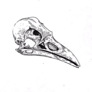 Crow Skull - Next tattoo idea if I ever (never) have the means to get it. Simple Crow skull design on the other side of my neck to balance out the shark teef.