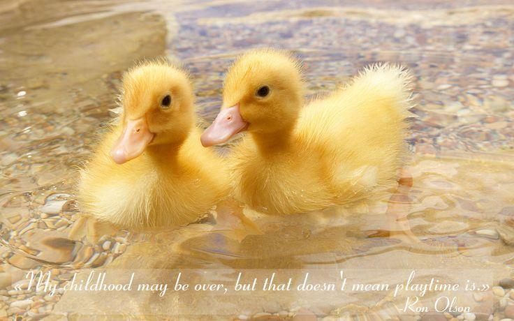quotes ducks water childhood yellow ronolson Bébés