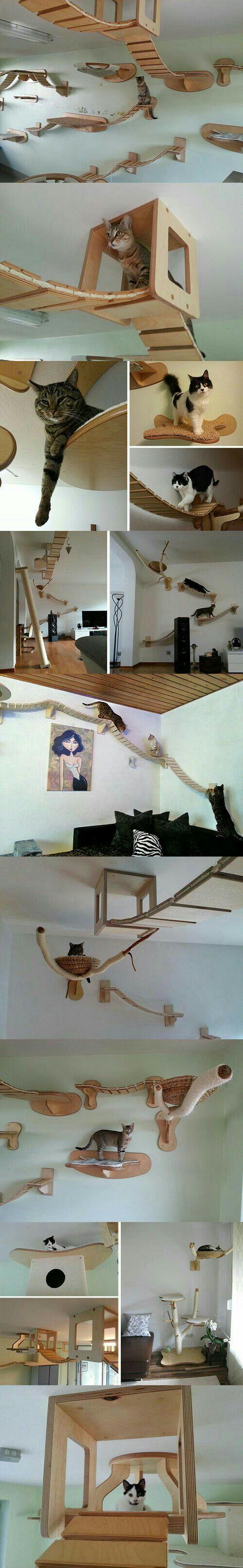 Cat friendly house designs