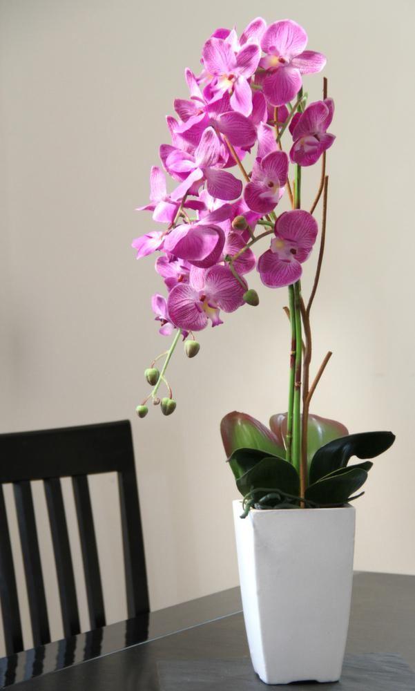 Orchid e fuchsia en pot blanc sur pots - Arrosage orchidee en pot ...