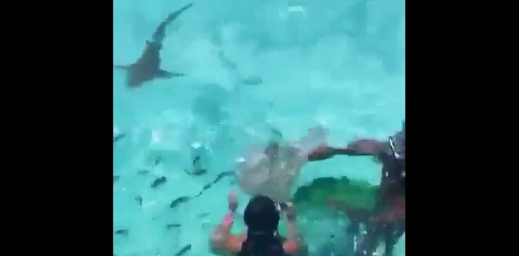 Watch his video clip of Usain Bolt And His Wife Kasi Swimming With Sharks