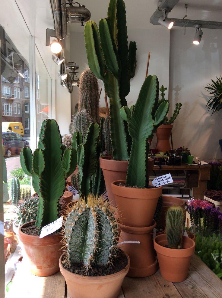 We verkopen veel cactussen in onze winkel in Amsterdam. Altijd veel voorraad!