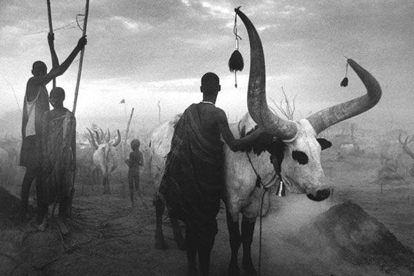 """В прокат вышел документальный #фильм Вима Вендерса (Wim Wenders) """"Соль Земли"""" о знаменитом бразильском фотографе Себастьяно Сальгадо (Sebastiao Ribeiro Salgado) и его взгляде на мир. Читаем на сайте Photodzen.com #photodzen"""