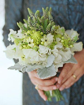 Les fleurs du mois daoût {Ornithogalum}