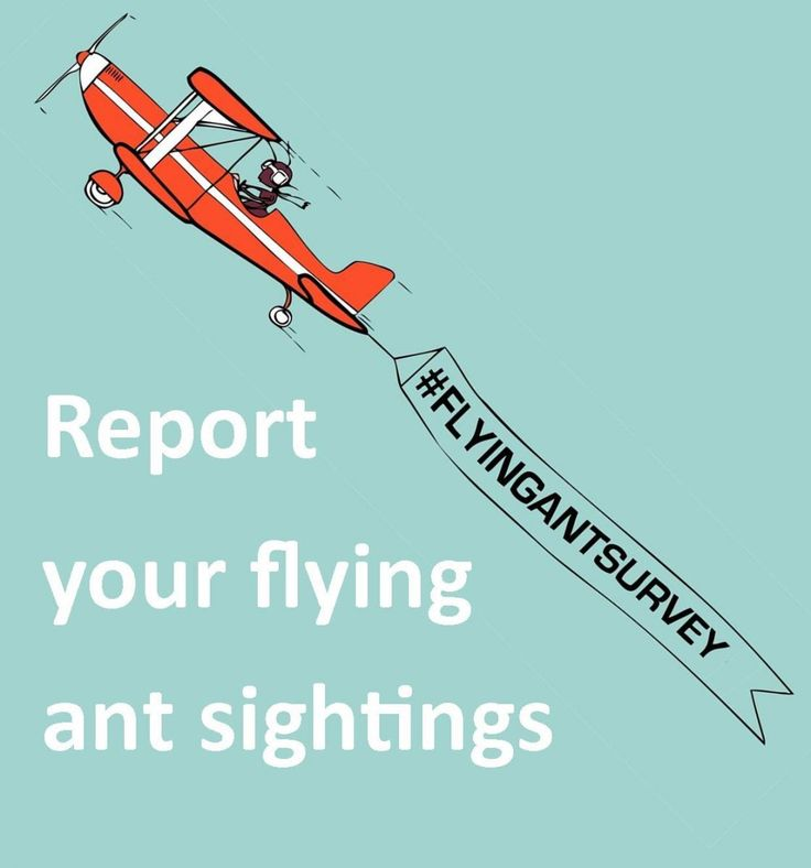 HAVE YOU SEEN A FLYING ANT? Last year's flying ant survey unexpectedly revealed two flying ant days, but will this be the same in 2013? Last year @Society of Biology received over 6,000 reports of flying ants and hope to beat this in 2013.  Become a citizen scientist and report your sighting online now! https://www.surveymonkey.com/s/5SJXR9Q