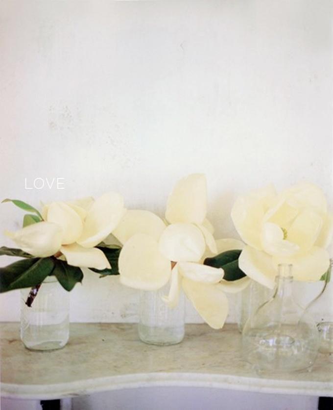 White Magnolias - Victoria Pearson for The best of Martha Stewart Living: Creamy White, Flower Arrangements, Magnolias Flower Wedding, Flower Power, Southern Charm, Magnolias Wedding, Sweets Magnolias, Southern Magnolias, White Magnolias