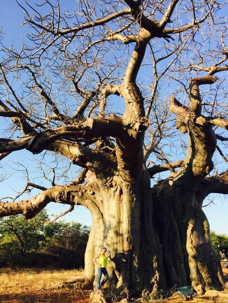 Baobab Tsipise