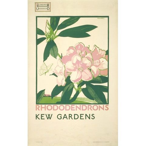Rhododendrons, Kew Gardens - Irene Fawkes (1923)