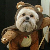 Love this!  I will have to make Percy an Ewok now.  Wonder if one of the kids will part with a teddy bear?