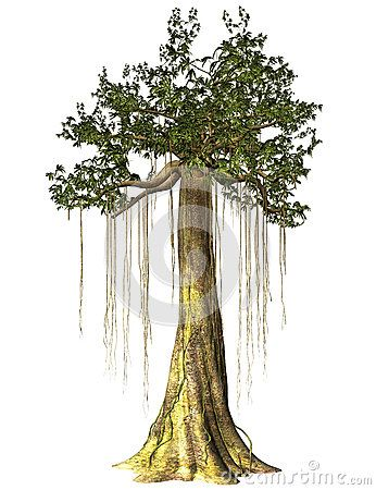 Swamp Tree Isolated - Download From Over 26 Million High Quality Stock Photos, Images, Vectors. Sign up for FREE today. Image: 45527267