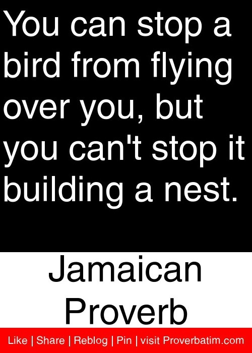 You can stop a bird from flying over you, but you can't stop it building a nest. - Jamaican Proverb #proverbs #quotes