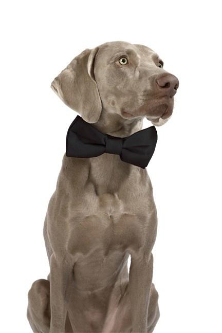 Original Bow Tie; The Classic