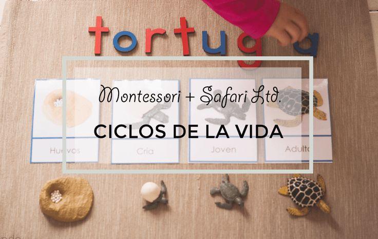 Ciclos de la vida Montessori con Safari Ltd. (Imprimibles gratuitos)