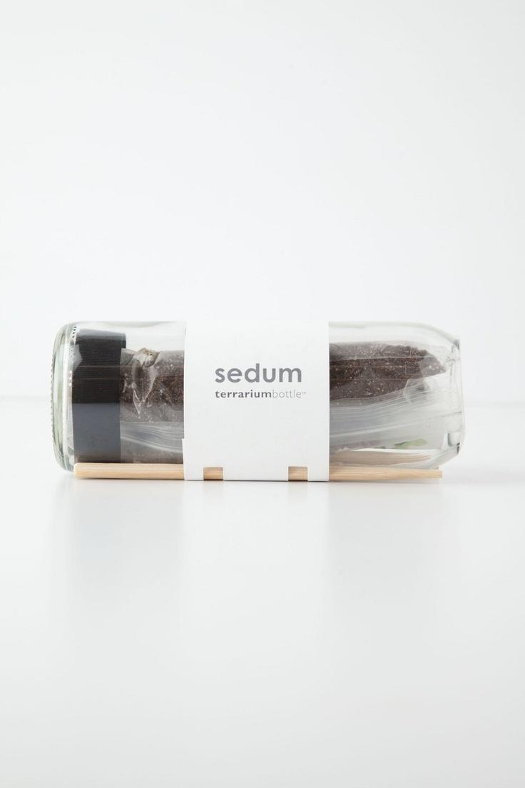 Terrarium Bottle - Beautiful packaging for a beautiful idea.