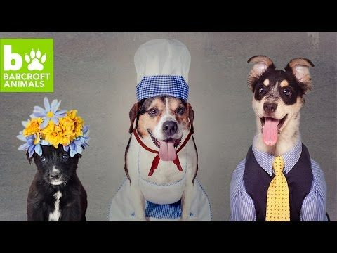 Rescue Dogs Get Dressed Up For Adoption: CUTE AS FLUFF : Video Clips From The…