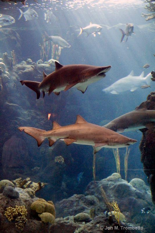 Florida Aquarium Tampa Florida Photograph At