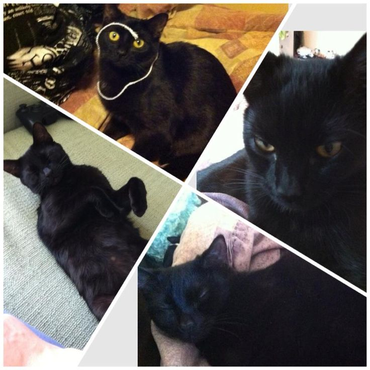 """GRANDE PRAIRIE -JUNE 29  westgate area. PLEASE jeep your eyes open for my best friend Luna  shes a very tiny, very skittish cat who escaped sometime yesterday! We live in northgate townhomes! She is all black (black nose) with a few random white hairs on her neck/chest. She is fixed and has a """"pouch""""... On her tummy. Very vocal! Please call or text 780-897-0323 or"""