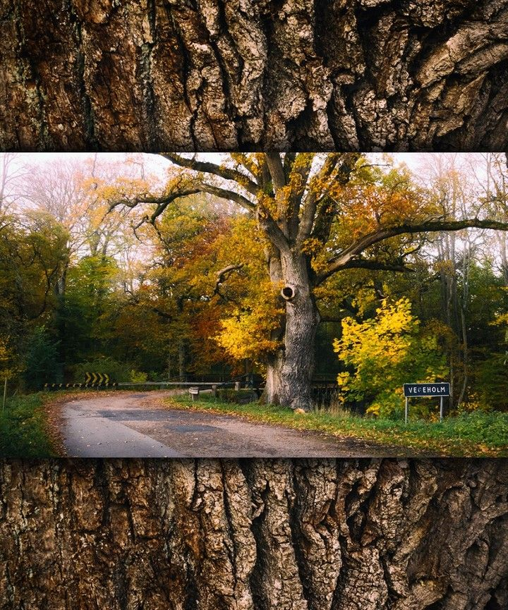#autumn #autumn🍁 #skåne #sweden #scandinavian #vegeholm #sverige #höst #otoño
