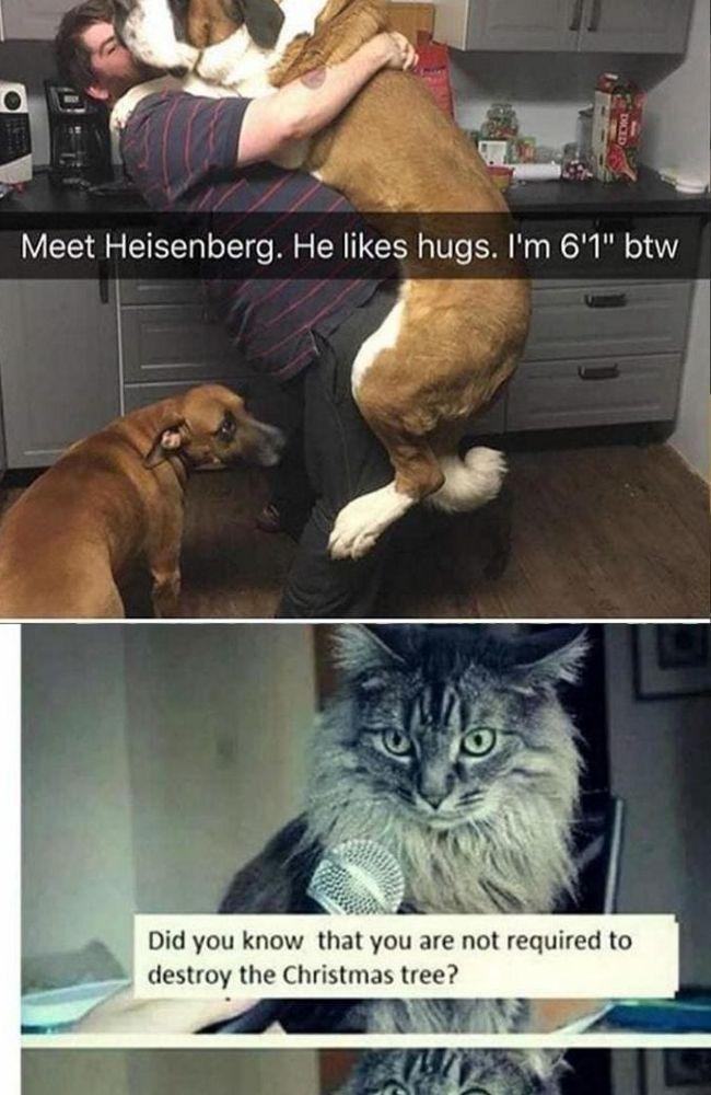 Top 30 Bad Dog Memes Dog Memes Bad Dog Dogs