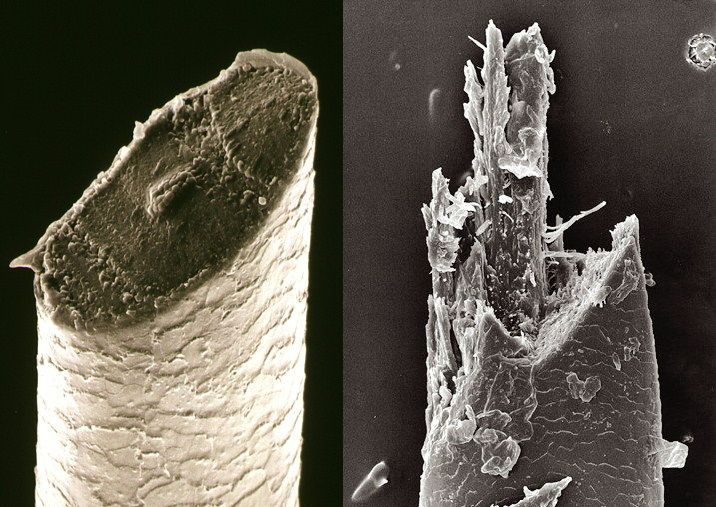 Beard hairs under a scanning electron microscope: razor (left) versus electric shaver (right)