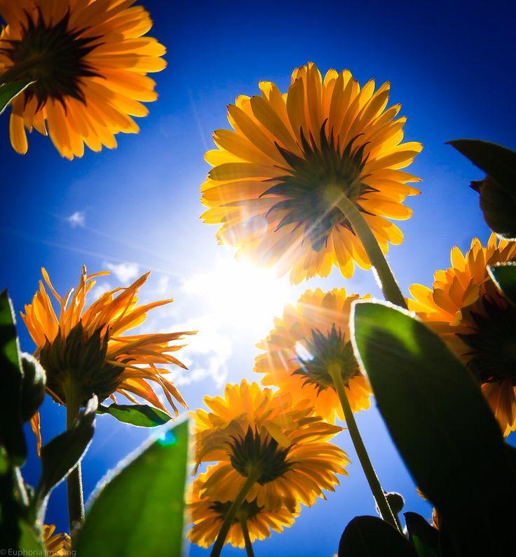 Красивая картинка солнышко с цветами