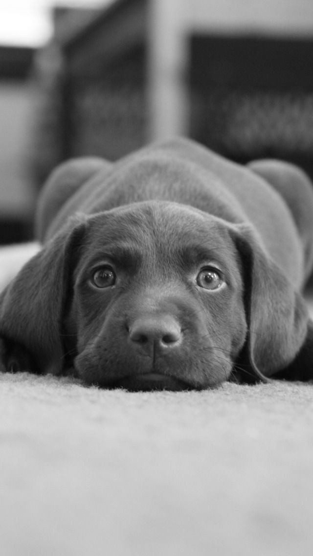 #Black #Cute #Puppy #Dog Cute Black Puppy