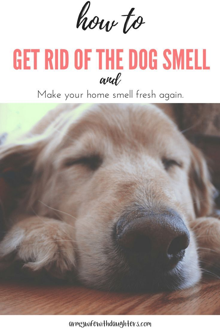 How To Eliminate Dog Odors From Your Home Dog Smells Smelly Dog