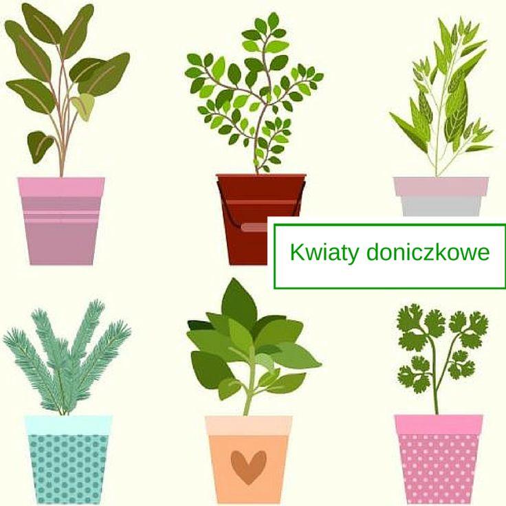 Kwiaty doniczkowe - zobacz, jak hodują je inni! Kwieciste inspiracje by Hydrobox.pl #hydrobox