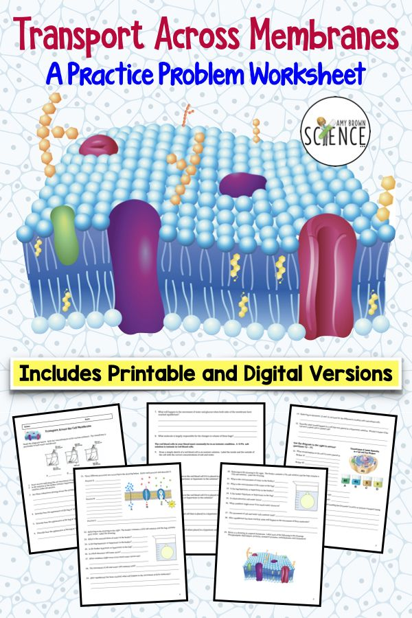 Cell Transport Practice Problem Worksheet Printable And Digital Versions Cell Transport Biology Classroom Osmosis