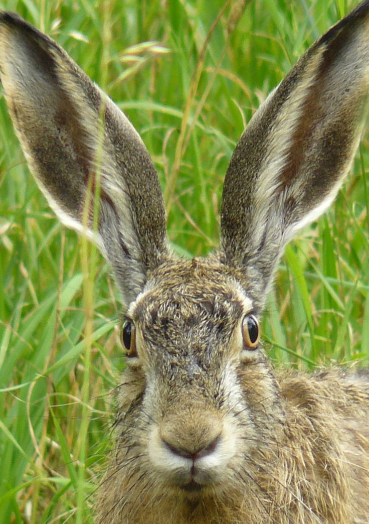 ~~Big ears | Hare in the Park - Happy Easter! | by Beleonora~~