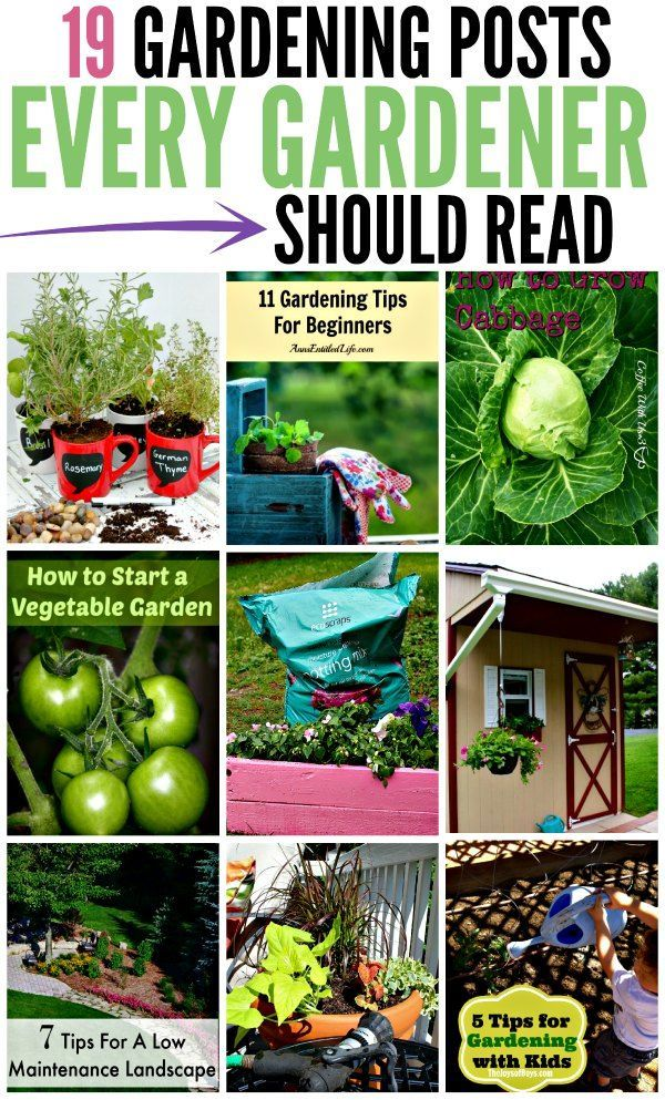 Gardening Posts   How To Garden   Gardening Tips And More!