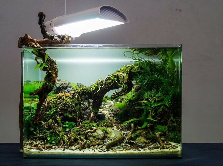 17 Best images about Planted Nano Tanks on Pinterest   Betta fish tank, Cubes and Planted aquarium