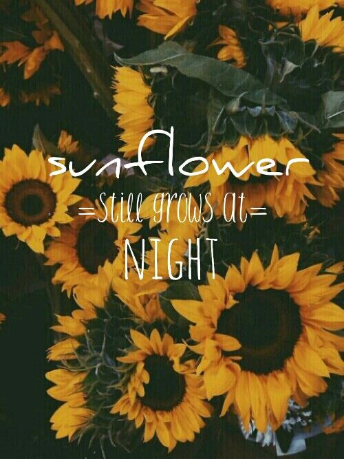Smile Quotes Wallpaper Free Download Sunflower Rex Orange County Sunflowers Sunflower