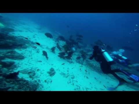 Shark feeding goes wrong - YouTube
