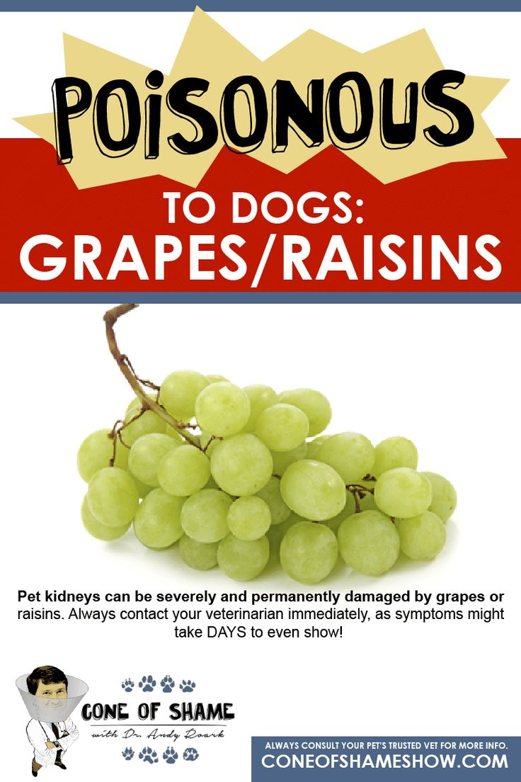 Grapes and raisins can be TOXIC to dogs. Contact a