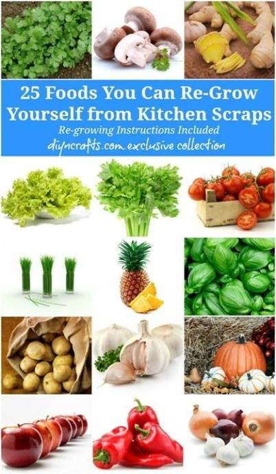 25 Foods You Can Re-Grow From Kitchen Scraps | Health & Natural Living