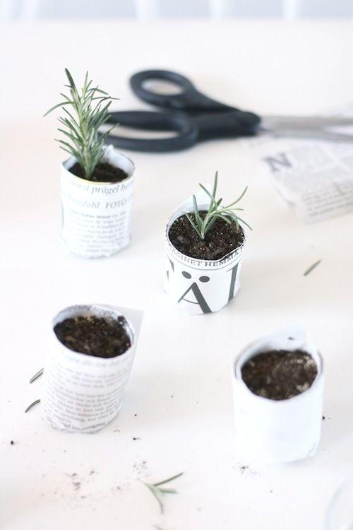 Mini form gardening #DIY