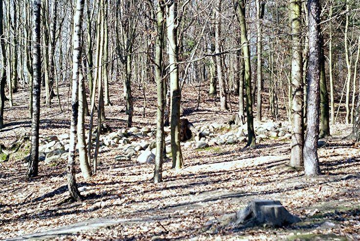 Kurhanowy Las w Samławkach