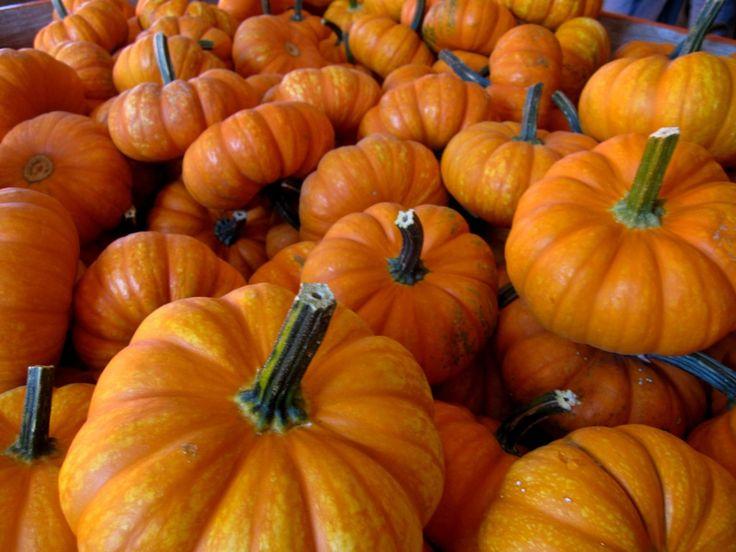 1 little pumpkin song