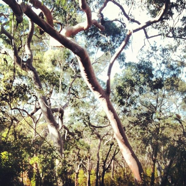 Twitter / Recent images by @terric68 - bush at Mt Kuring-gai
