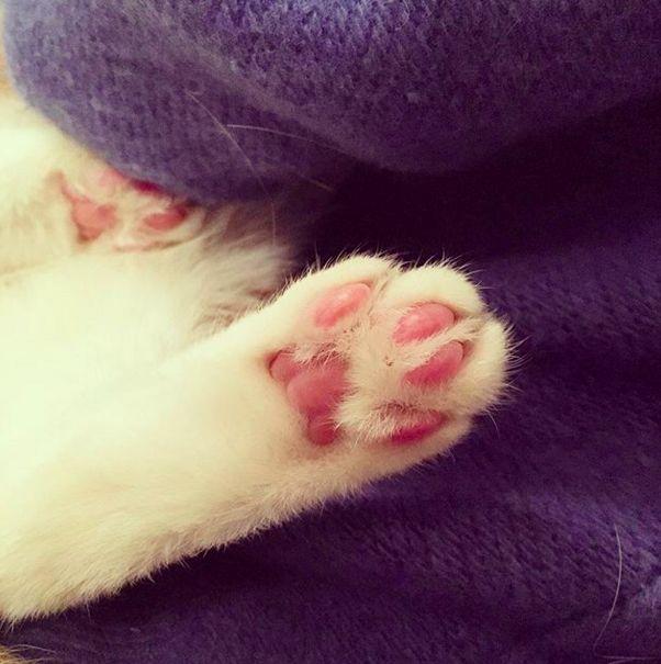 Vielleicht brauchst du ein paar rosa Bohnen. | 21 Little Kitty Peets zur Verbesserung Ihrer …   – Kitten Kats❤️