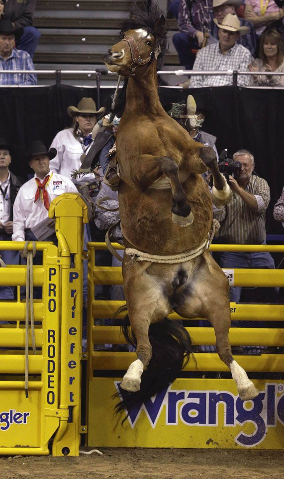 FLASHBACK.  Saddle Bronc Riding - Wrangler National Finals Rodeo - Las Vegas, Nevada.