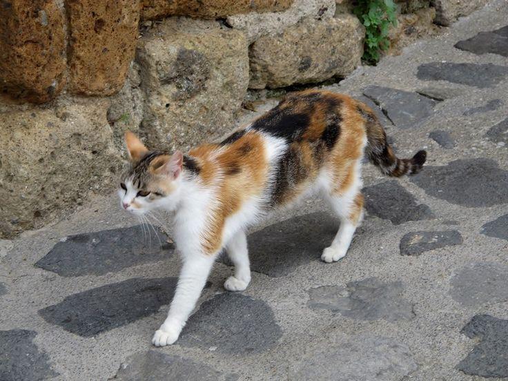 The cat walk in Castelsardo, Sardinia.