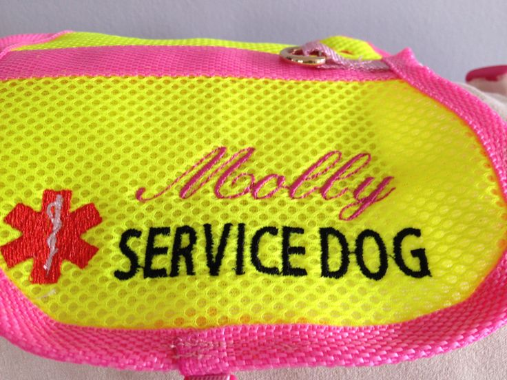 Psychiatric Service Dog Nz