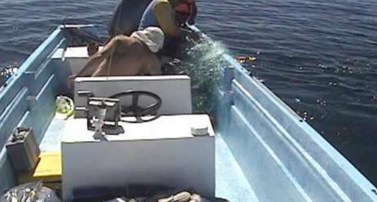 Humpback Whale Puts On Show For Men Who Saved Her