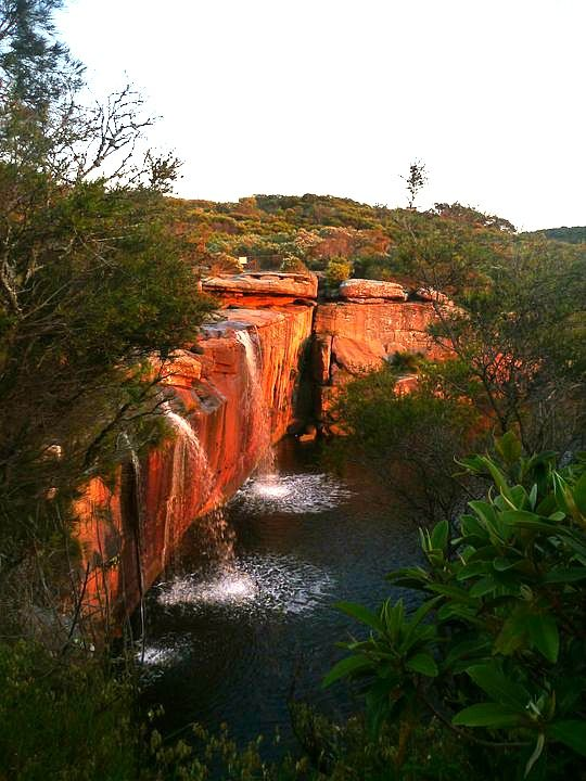 Visit Royal National Park, Sydney - 33 Things to Do in Sydney