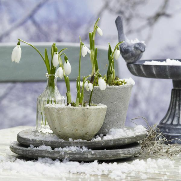 blumenzwiebeln anbauen originell keramisch schüssel weiß winterpflanzen