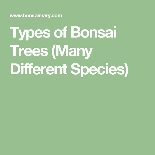 Types of Bonsai Trees (Many Different Species)
